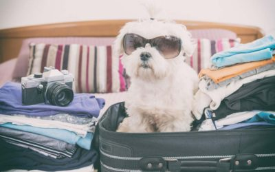 Tips for Taking Care of your Pets while you Travel