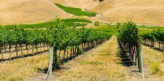 Livermore Wine Tours